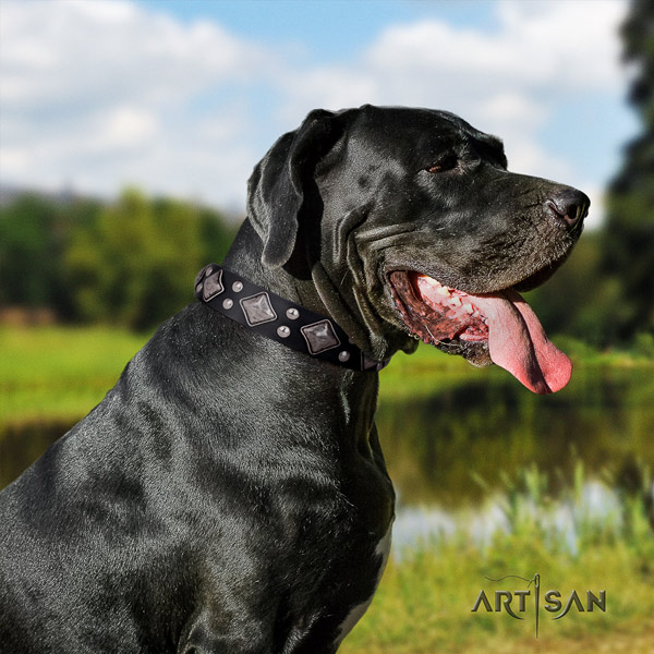 Great Dane convenient collar with unusual adornments for your canine