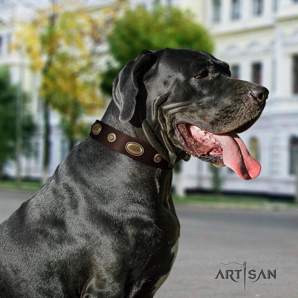 Great Dane stylish design leather collar with rust resistant buckle