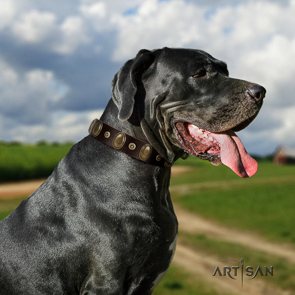 Great Dane stylish walking genuine leather collar with studs for your doggie