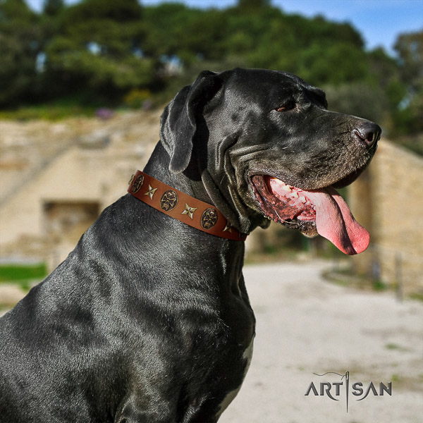 Great Dane comfy wearing leather collar with adornments for your dog