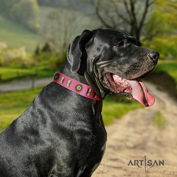 Great Dane daily walking leather collar with studs for your doggie