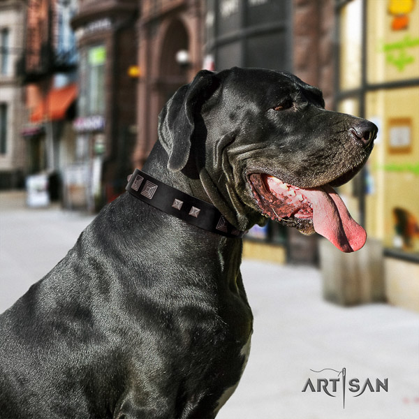 Great Dane comfy wearing full grain genuine leather collar with adornments for your canine