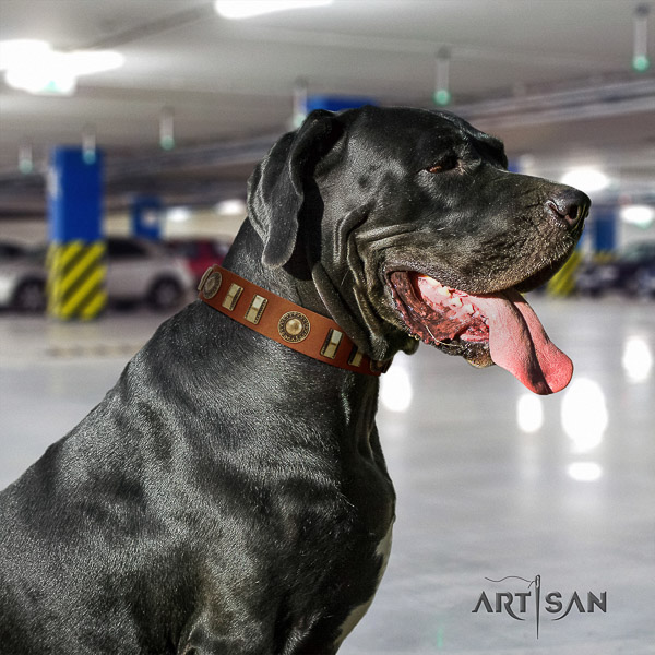 Great Dane basic training leather collar with embellishments for your canine