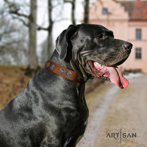 Great Dane comfortable wearing full grain leather collar with adornments for your pet