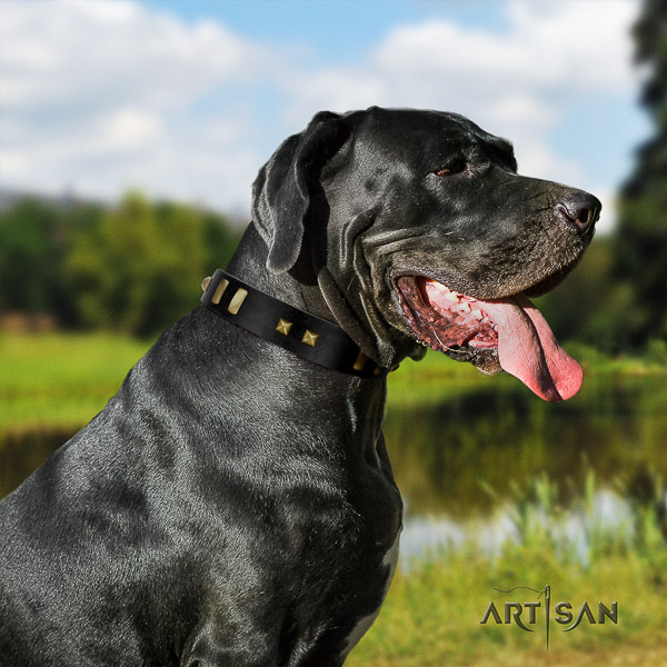 Great Dane fancy walking full grain natural leather collar with studs for your four-legged friend
