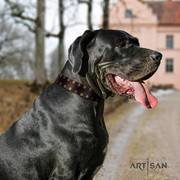 Great Dane walking full grain leather collar with studs for your pet