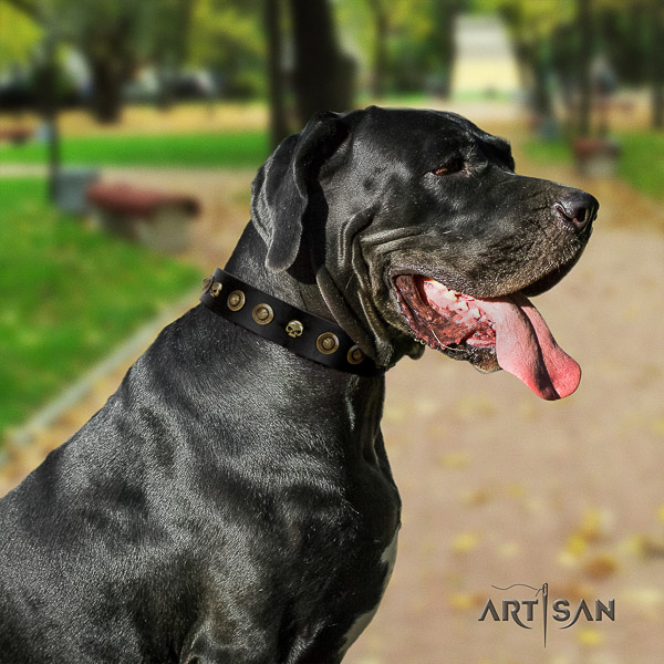 Great Dane daily walking full grain genuine leather collar with adornments for your doggie