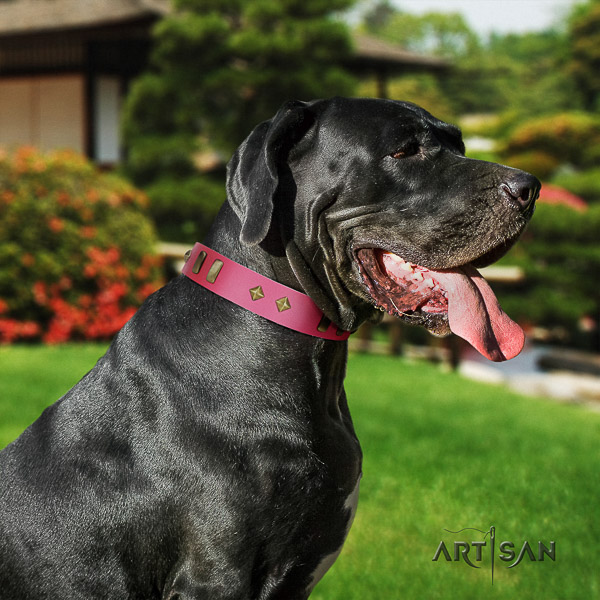 Great Dane everyday use full grain leather collar with studs for your doggie