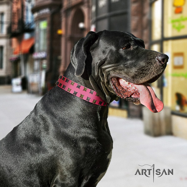 Great Dane handy use leather collar with embellishments for your doggie