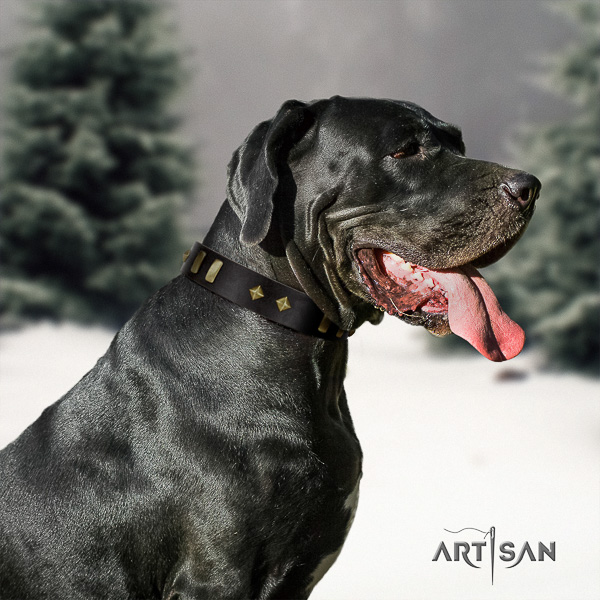 Great Dane fancy walking full grain leather collar with adornments for your four-legged friend