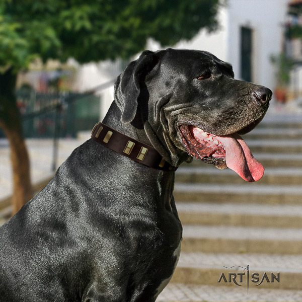 Great Dane everyday use full grain genuine leather collar with embellishments for your four-legged friend