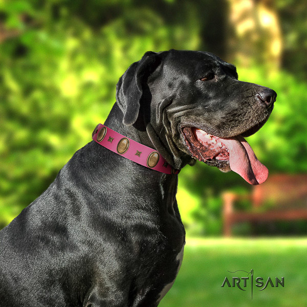 Great Dane walking full grain leather collar with adornments for your dog