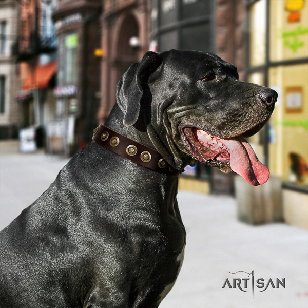 Great Dane walking genuine leather collar with adornments for your pet