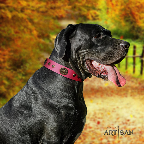 Great Dane trendy full grain leather collar with rust-proof fittings