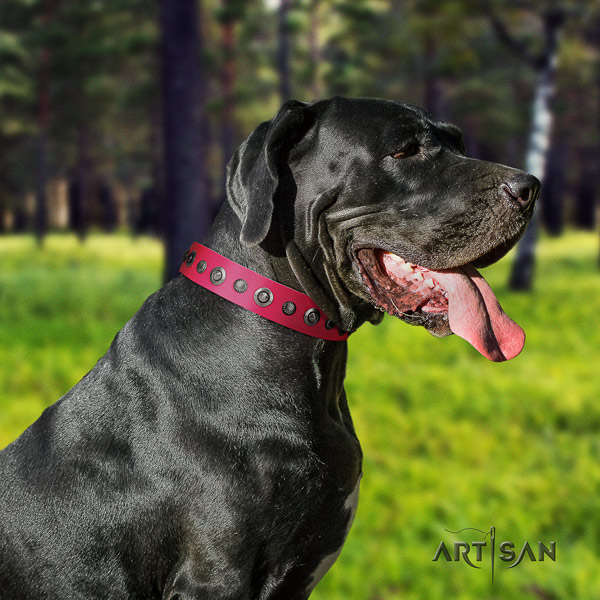 Great Dane decorated full grain leather collar with corrosion resistant buckle