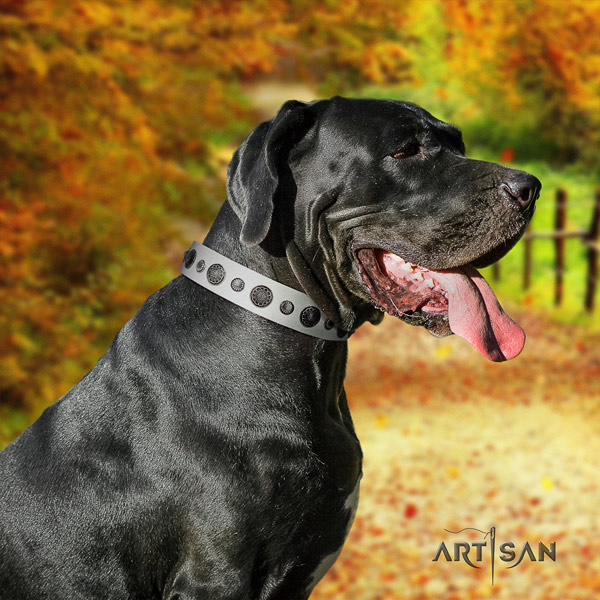 Great Dane best quality natural leather collar with corrosion proof buckle