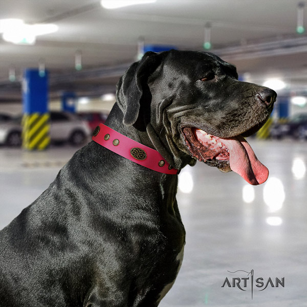 Great Dane adjustable genuine leather collar with rust resistant fittings