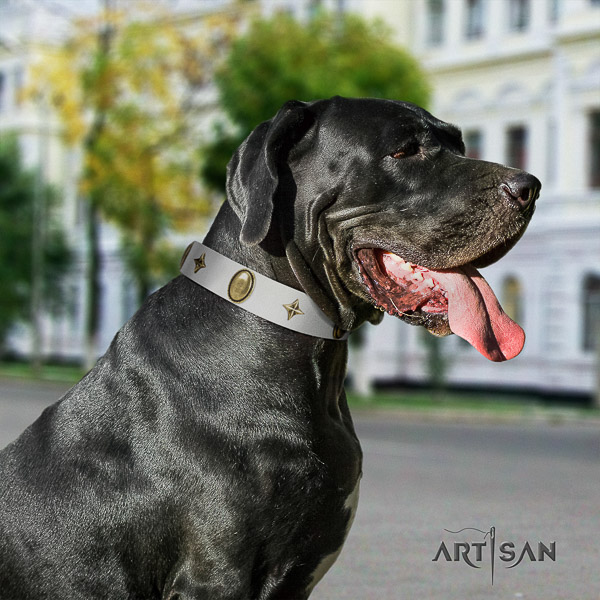 Great Dane daily walking full grain natural leather collar with embellishments for your pet