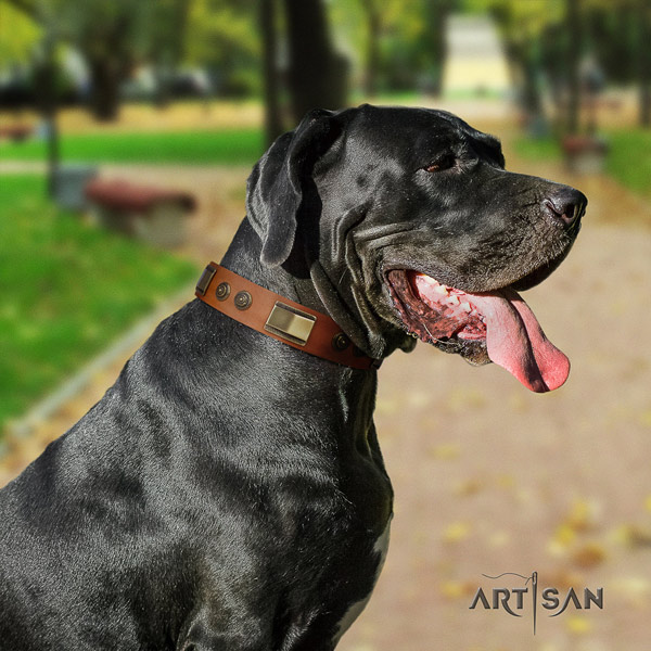 Great Dane unusual full grain natural leather collar with rust resistant fittings