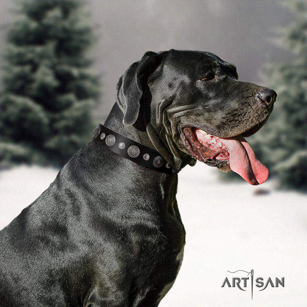 Great Dane top quality leather collar with rust resistant d-ring