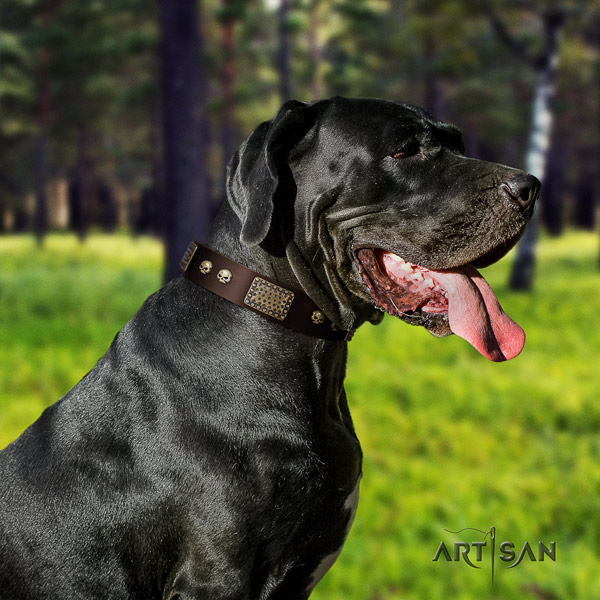Great Dane embellished full grain genuine leather collar with corrosion proof fittings