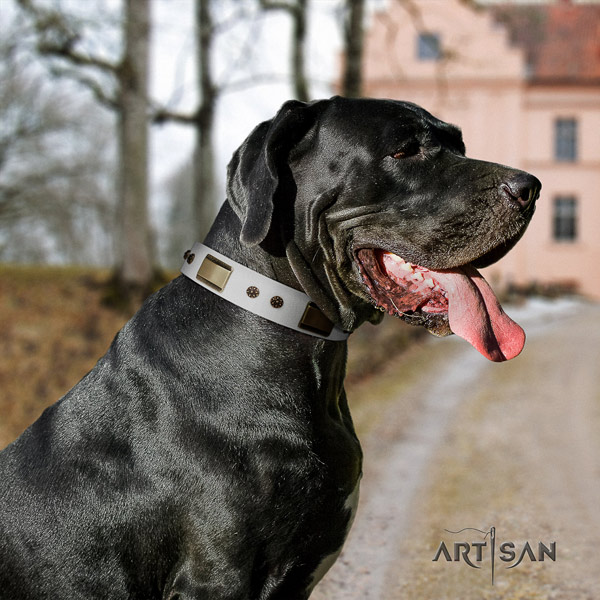 Great Dane designer leather collar with corrosion proof traditional buckle
