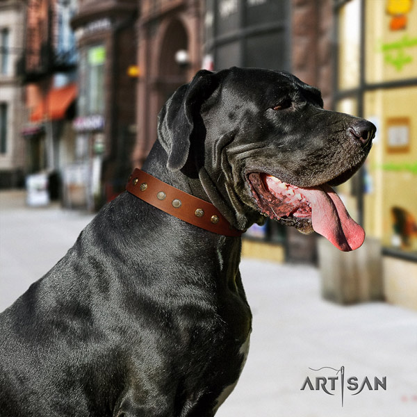 Great Dane easy wearing full grain natural leather collar with corrosion resistant traditional buckle