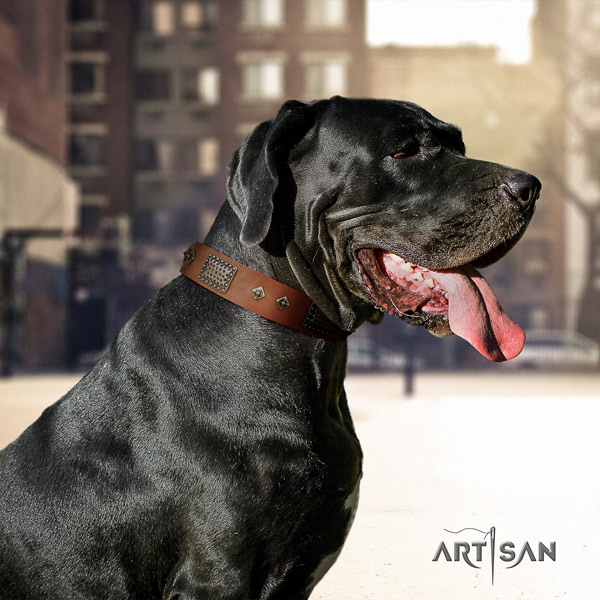 Great Dane awesome full grain natural leather collar with corrosion resistant fittings
