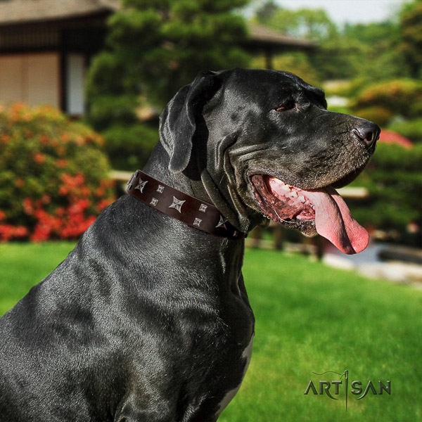 Great Dane daily walking natural leather collar with adornments for your dog