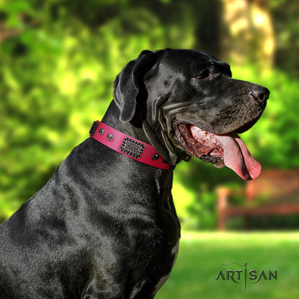 Great Dane inimitable full grain genuine leather collar with rust-proof d-ring