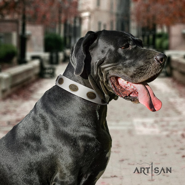 Great Dane inimitable leather collar with rust-proof hardware