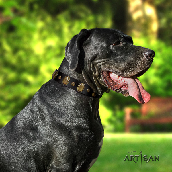 Great Dane comfy wearing full grain genuine leather collar with decorations for your doggie