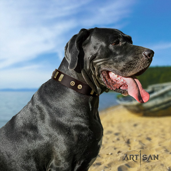 Great Dane easy wearing full grain natural leather collar with embellishments for your four-legged friend