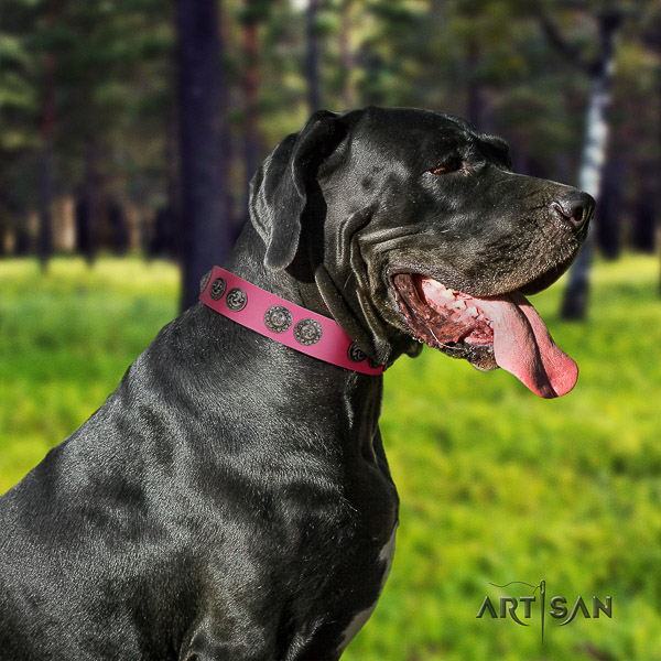 Great Dane walking leather collar with adornments for your canine