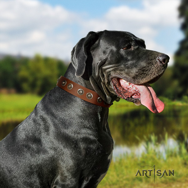 Great Dane everyday use full grain genuine leather collar with decorations for your four-legged friend