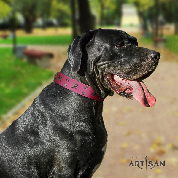 Great Dane daily use natural leather collar with decorations for your canine
