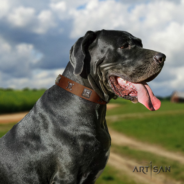 Great Dane handy use full grain natural leather collar with adornments for your four-legged friend