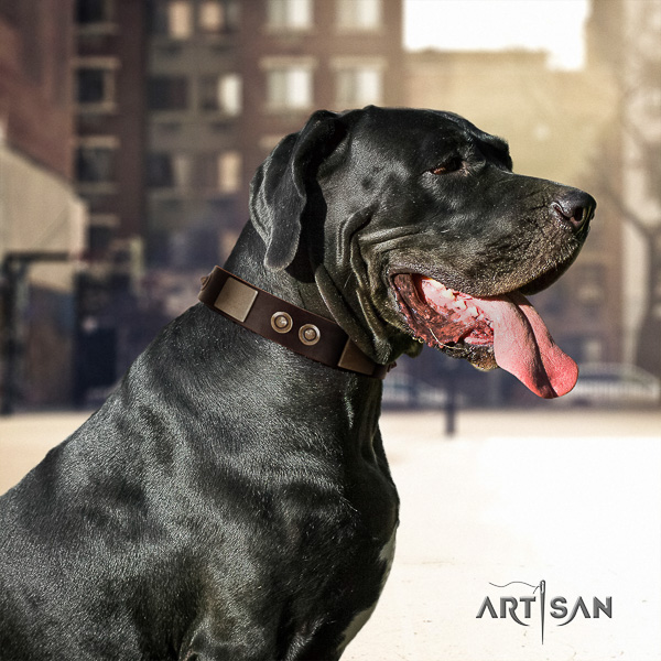 Great Dane stylish walking natural leather collar with embellishments for your canine