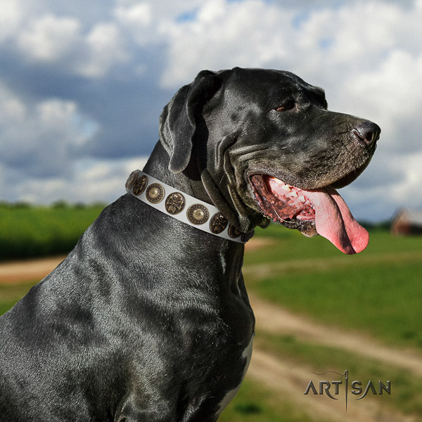 Great Dane walking full grain natural leather collar with decorations for your doggie