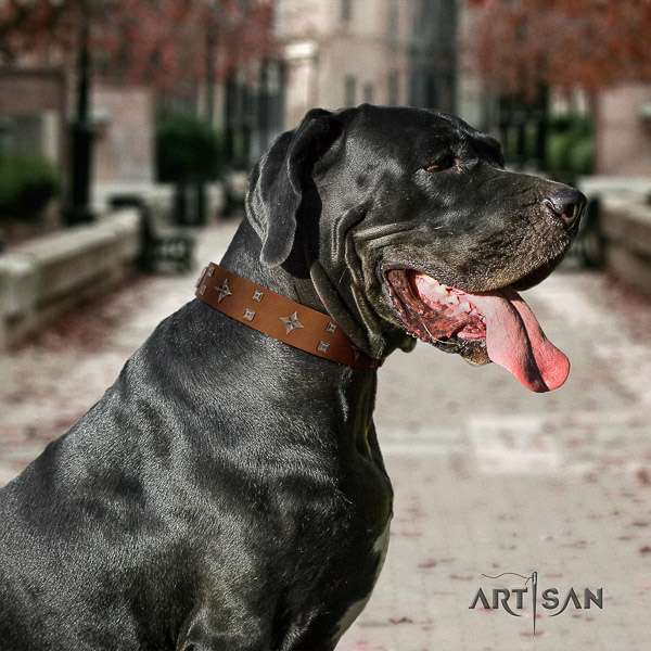 Great Dane walking leather collar with studs for your doggie