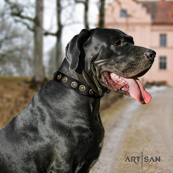 Great Dane everyday walking genuine leather collar with adornments for your pet