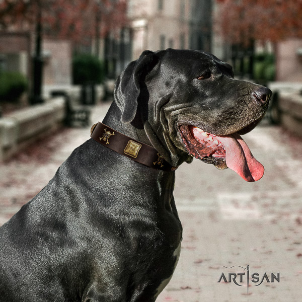 Great Dane comfortable wearing full grain natural leather collar with adornments for your four-legged friend