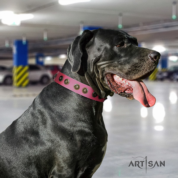 Great Dane handy use leather collar with adornments for your pet