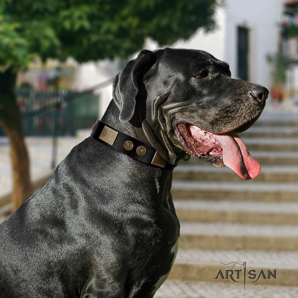 Great Dane daily walking full grain leather collar with studs for your four-legged friend