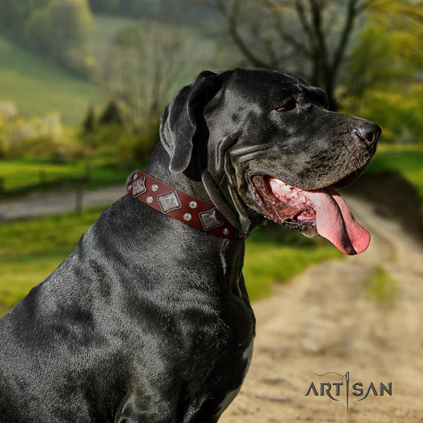 Great Dane fine quality collar with exceptional embellishments for your dog