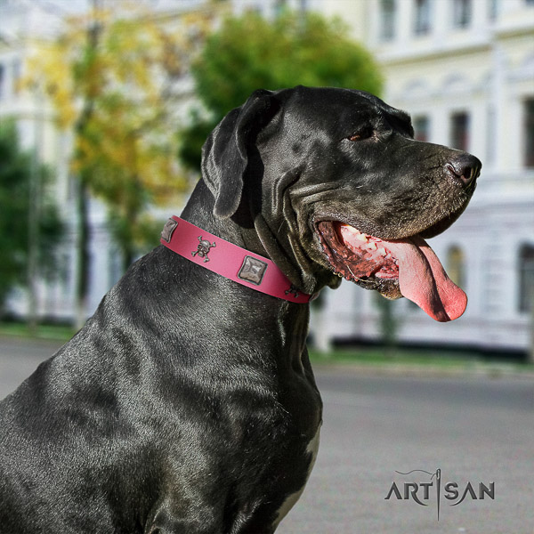 Great Dane daily use genuine leather collar with studs for your dog