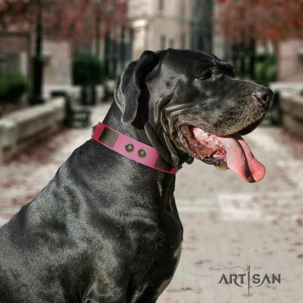 Great Dane everyday use natural leather collar with adornments for your doggie