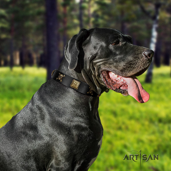 Great Dane comfortable wearing full grain leather collar with embellishments for your pet