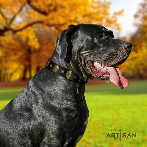 Great Dane everyday walking full grain leather collar with embellishments for your dog