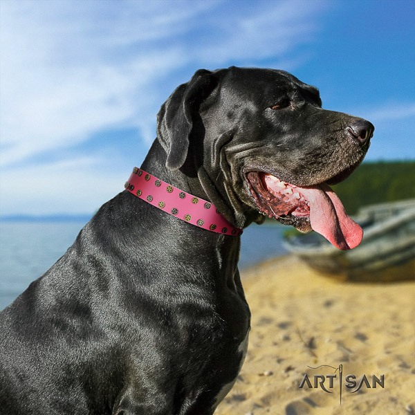 Great Dane comfortable wearing full grain natural leather collar with embellishments for your pet
